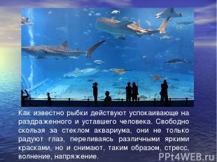 Как известно рыбки действуют успокаивающе на раздраженного и уставшего человека.