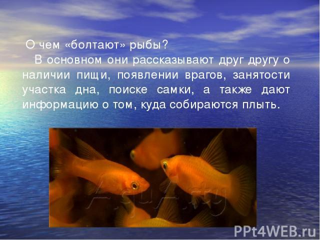 О чем «болтают» рыбы?  В основном они рассказывают друг другу о наличии пищи, появлении врагов, занятости участка дна, поиске самки, а также дают информацию о том, куда собираются плыть.