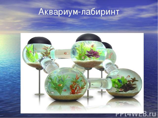 Аквариум-лабиринт