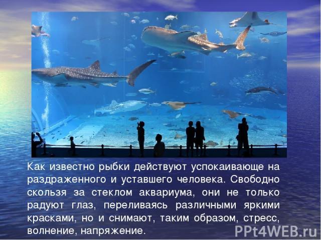 Как известно рыбки действуют успокаивающе на раздраженного и уставшего человека. Свободно скользя за стеклом аквариума, они не только радуют глаз, переливаясь различными яркими красками, но и снимают, таким образом, стресс, волнение, напряжение.