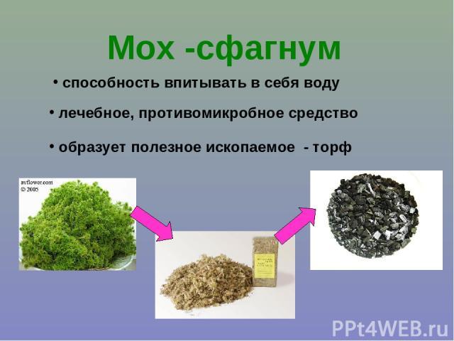 Мох -сфагнум способность впитывать в себя воду лечебное, противомикробное средство образует полезное ископаемое - торф