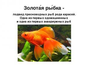 Золота я ры бка - подвид пресноводных рыб рода подвид пресноводных рыб рода кара