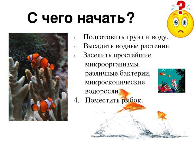 С чего начать? Подготовить грунт и воду. Высадить водные растения. Заселить простейшие микроорганизмы – различные бактерии, микроскопические водоросли. 4. Поместить рыбок.