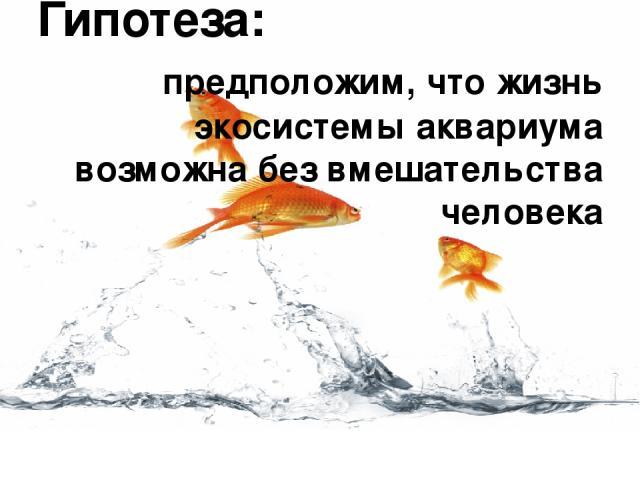 Гипотеза: предположим, что жизнь экосистемы аквариума возможна без вмешательства человека