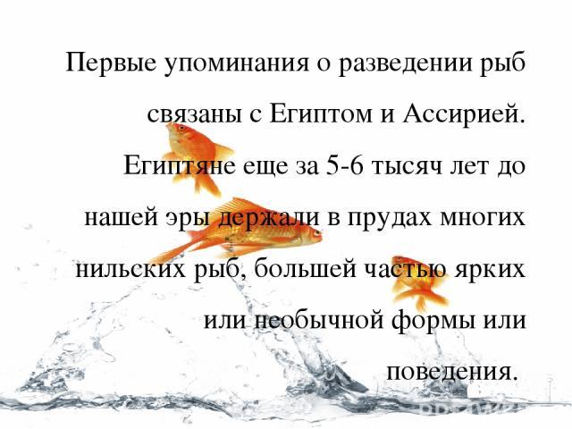 Первые упоминания о разведении рыб связаны с Египтом и Ассирией. Египтяне еще за 5-6 тысяч лет до нашей эры держали в прудах многих нильских рыб, большей частью ярких или необычной формы или поведения.