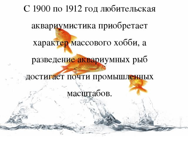 С 1900 по 1912 год любительская аквариумистика приобретает характер массового хобби, а разведение аквариумных рыб достигает почти промышленных масштабов.