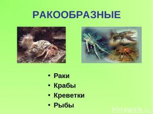 РАКООБРАЗНЫЕ Раки Крабы Креветки Рыбы