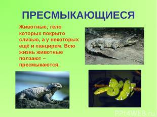 ПРЕСМЫКАЮЩИЕСЯ Животные, тело которых покрыто слизью, а у некоторых ещё и панцир