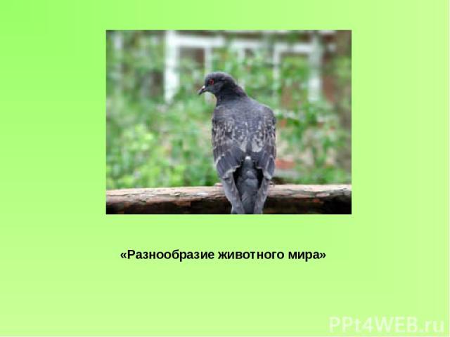 «Разнообразие животного мира»