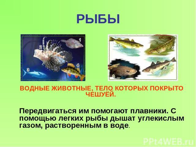РЫБЫ ВОДНЫЕ ЖИВОТНЫЕ, ТЕЛО КОТОРЫХ ПОКРЫТО ЧЕШУЁЙ. Передвигаться им помогают плавники. С помощью легких рыбы дышат углекислым газом, растворенным в воде.