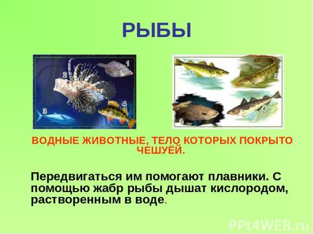 РЫБЫ ВОДНЫЕ ЖИВОТНЫЕ, ТЕЛО КОТОРЫХ ПОКРЫТО ЧЕШУЁЙ. Передвигаться им помогают плавники. С помощью жабр рыбы дышат кислородом, растворенным в воде.