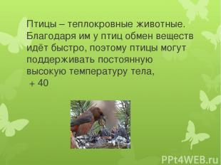 Птицы – теплокровные животные. Благодаря им у птиц обмен веществ идёт быстро, по