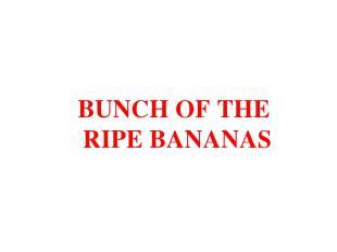 BUNCH OF THE RIPE BANANAS