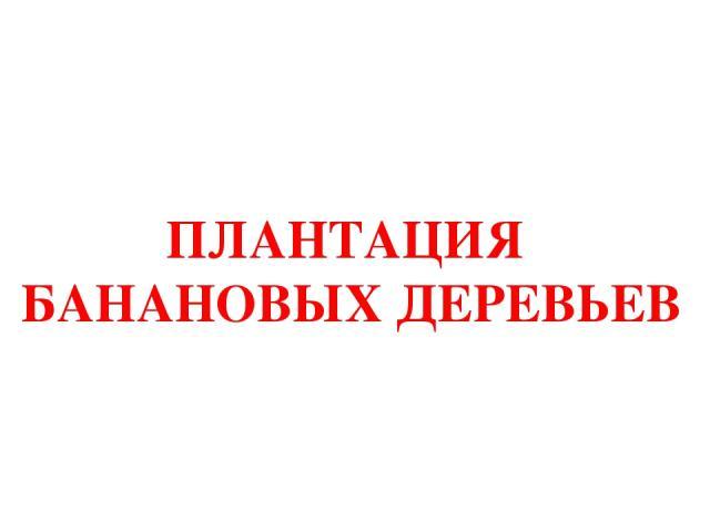 ПЛАНТАЦИЯ БАНАНОВЫХ ДЕРЕВЬЕВ