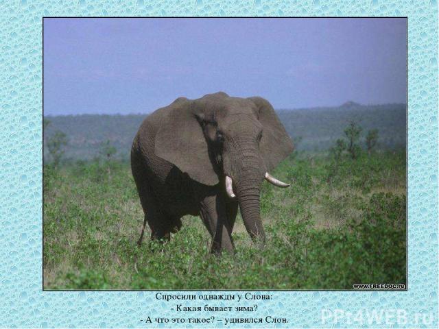 Спросили однажды у Слона: - Какая бывает зима? - А что это такое? – удивился Слон.