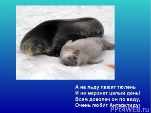 А на льду лежит тюлень И не мерзнет целый день! Всем доволен он по виду, Очень