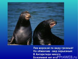 Лев морской по виду грозный! Но обманчив - вид серьезный: В Антарктиде никого