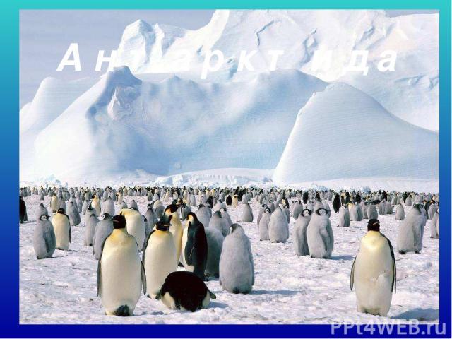 А н т а р к т и д а Антарктида.