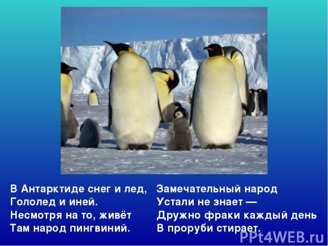 ВАнтарктиде снег илед, Гололед ииней. Несмотря нато, живёт Там народ пингвиний. Замечательный народ Устали незнает— Дружно фраки каждый день Впроруби стирает. Вантарктиде снег илед, гололед ииней. Несмотря нато, живёт там народ пингвиний.…