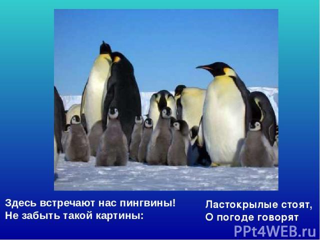 Здесь встречают нас пингвины! Не забыть такой картины: Ластокрылые стоят, О погоде говорят Здесь встречают нас пингвины! Не забыть такой картины: Ластокрылые стоят, О погоде говорят.