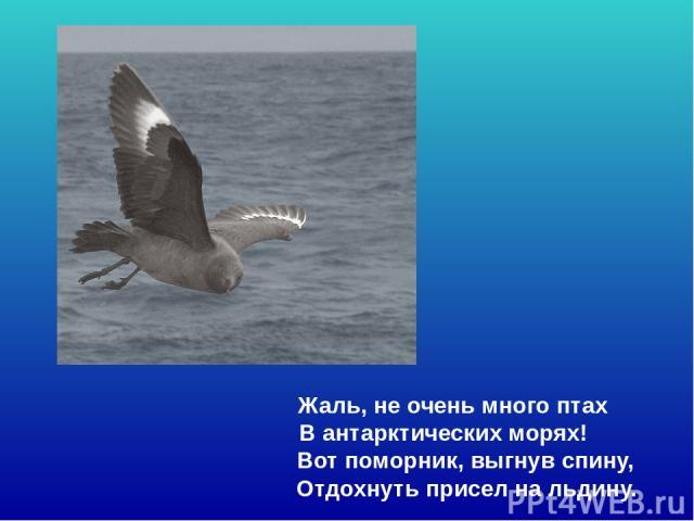 Жаль, не очень много птах В антарктических морях! Вот поморник, выгнув спину, Отдохнуть присел на льдину. Жаль, не очень много птах В антарктических морях! Вот поморник, выгнув спину, отдохнуть присел на льдину.