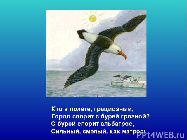Кто в полете, грациозный, Гордо спорит с бурей грозной? С бурей спорит альбатрос, Сильный, смелый, как матрос! Кто в полете, грациозный, гордо спорит с бурей грозной? С бурей спорит альбатрос, сильный, смелый, как матрос!