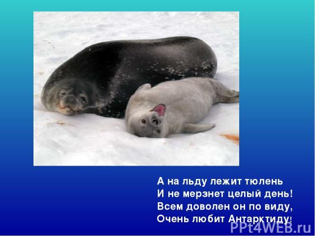 А на льду лежит тюлень И не мерзнет целый день! Всем доволен он по виду, Очень любит Антарктиду! А на льду лежит тюлень И не мерзнет целый день! Всем доволен он по виду, очень любит антарктиду!