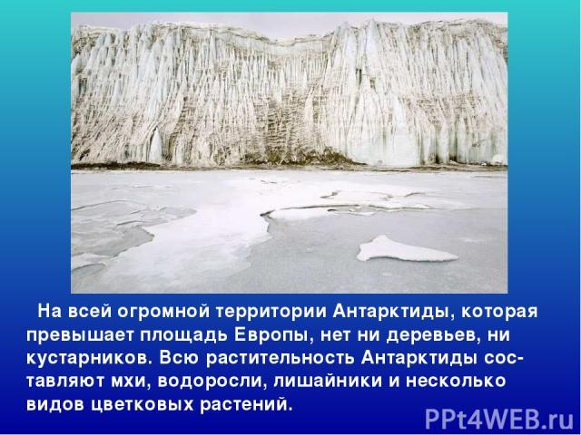 На всей огромной территории Антарктиды, которая превышает площадь Европы, нет ни деревьев, ни кустарников. Всю растительность Антарктиды сос-тавляют мхи, водоросли, лишайники и несколько видов цветковых растений. На всей огромной территории антаркти…