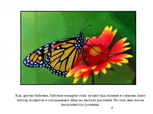 Как другие бабочки, бабочки-монархи тоже летают над полями и озёрами, пьют некта