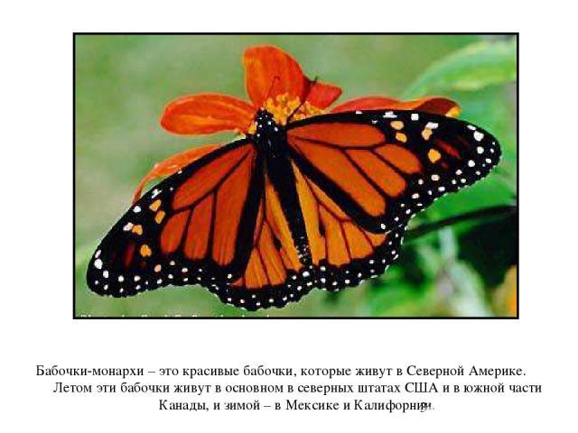 Бабочки-монархи – это красивые бабочки, которые живут в Северной Америке. Летом эти бабочки живут в основном в северных штатах США и в южной части Канады, и зимой – в Мексике и Калифорнии. Бабочки-монархи – это красивые бабочки, которые живут в севе…
