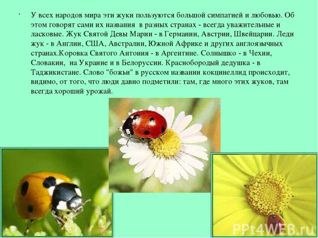 У всех народов мира эти жуки пользуются большой симпатией и любовью. Об этом говорят сами их названия в разных странах - всегда уважительные и ласковые. Жук Святой Девы Марии - в Германии, Австрии, Швейцарии. Леди жук - в Англии, США, Австралии, Южн…