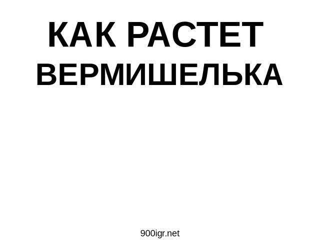 КАК РАСТЕТ ВЕРМИШЕЛЬКА 900igr.net