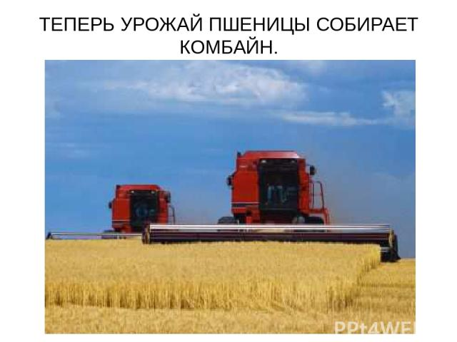 ТЕПЕРЬ УРОЖАЙ ПШЕНИЦЫ СОБИРАЕТ КОМБАЙН.