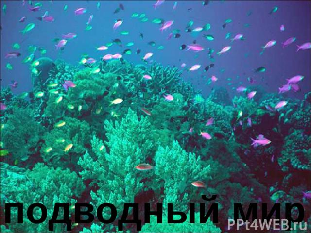 подводный мир Подводный мир.