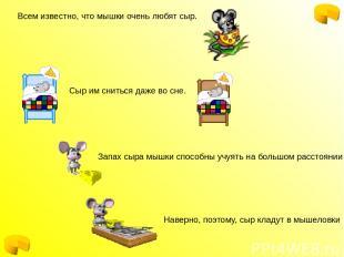 Всем известно, что мышки очень любят сыр. Сыр им сниться даже во сне. Запах сыра