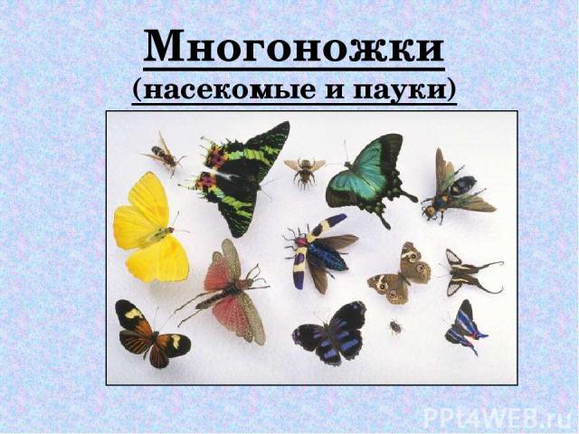 Многоножки (насекомые и пауки)