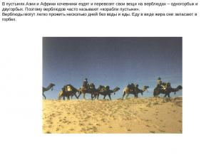 В пустынях Азии и Африки кочевники ездят и перевозят свои вещи на верблюдах – од