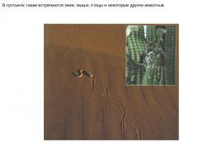 В пустынях также встречаются змеи, мыши, птицы и некоторые другие животные. В пу