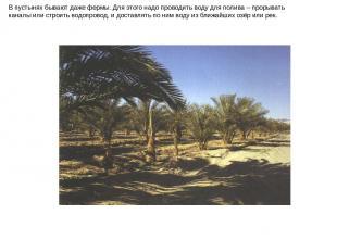 В пустынях бывают даже фермы. Для этого надо проводить воду для полива – прорыва