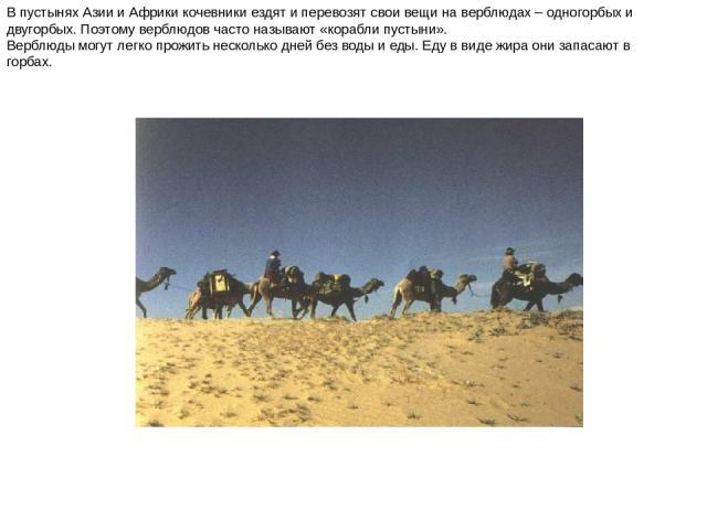В пустынях Азии и Африки кочевники ездят и перевозят свои вещи на верблюдах – одногорбых и двугорбых. Поэтому верблюдов часто называют «корабли пустыни». Верблюды могут легко прожить несколько дней без воды и еды. Еду в виде жира они запасают в горб…