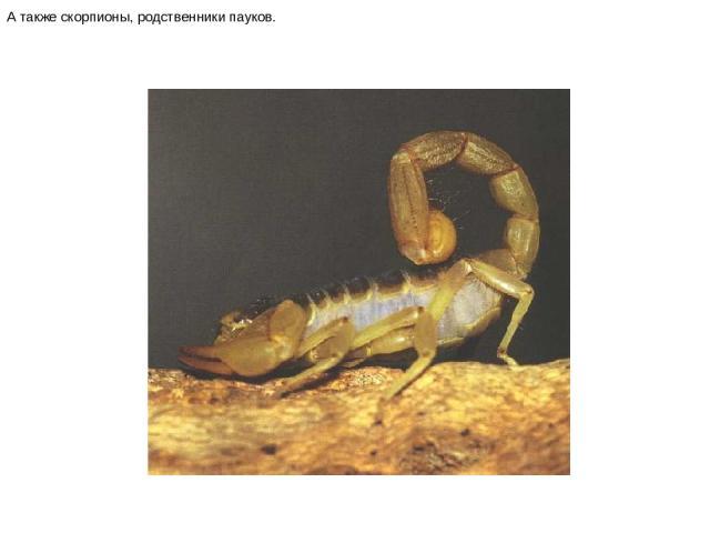 А также скорпионы, родственники пауков. А также скорпионы, родственники пауков.