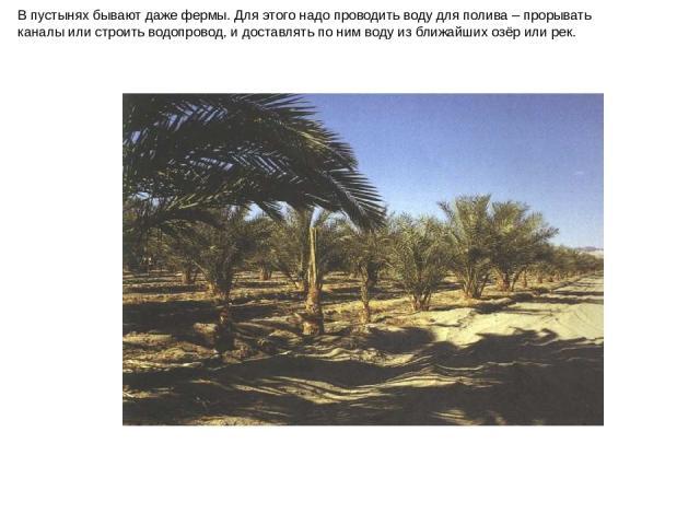 В пустынях бывают даже фермы. Для этого надо проводить воду для полива – прорывать каналы или строить водопровод, и доставлять по ним воду из ближайших озёр или рек. В пустынях бывают даже фермы. Для этого надо проводить воду для полива – прорывать …