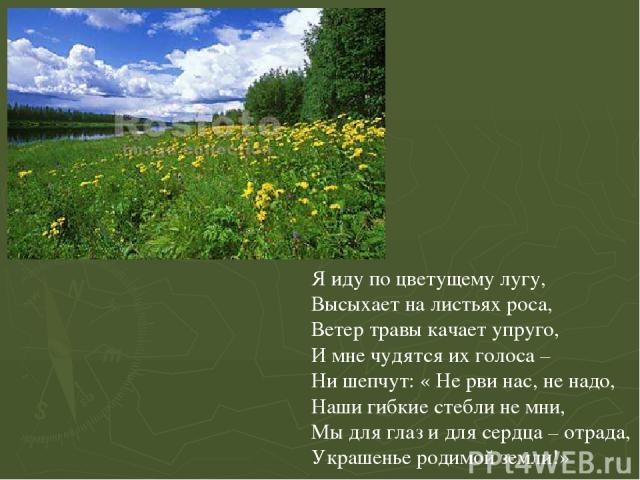 Я иду по цветущему лугу, Высыхает на листьях роса, Ветер травы качает упруго, И мне чудятся их голоса – Ни шепчут: « Не рви нас, не надо, Наши гибкие стебли не мни, Мы для глаз и для сердца – отрада, Украшенье родимой земли!» Я иду по цветущему лугу…