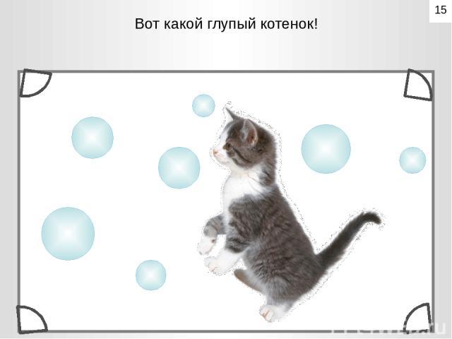 Вот какой глупый котенок! 15
