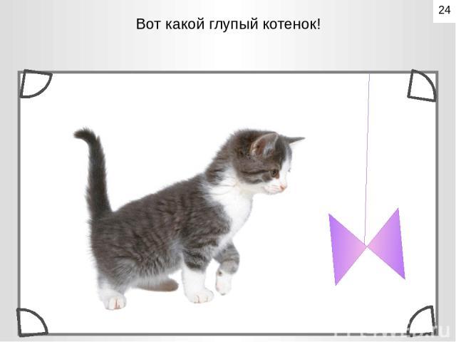 Вот какой глупый котенок!  24
