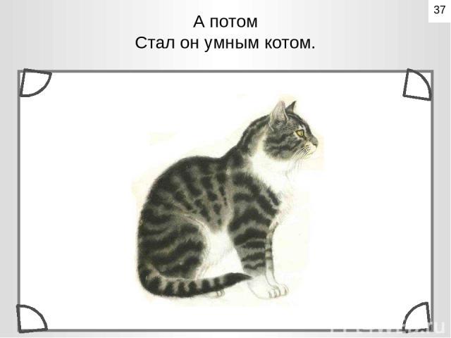А потом Стал он умным котом. 37