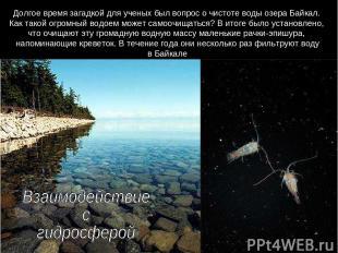 Долгое время загадкой для ученых был вопрос о чистоте воды озера Байкал. Как так