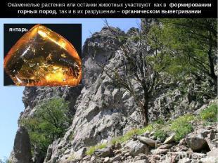 Окаменелые растения или останки животных участвуют как в формировании горных пор