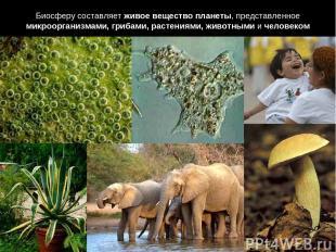 Биосферу составляет живое вещество планеты, представленное микроорганизмами, гри