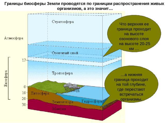 Границы биосферы Земли проводятся по границам распространения живых организмов, а это значит… Что верхняя ее граница проходит на высоте озонового слоя на высоте 20-25 км … …а нижняя граница проходит на той глубине, где перестают встречаться организмы.